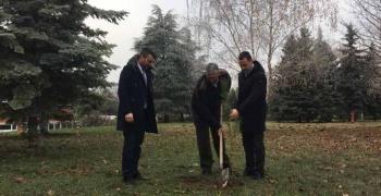 Врбас ускоро богатији за 500 садница црног бора